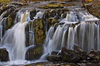 Fintry Loup (1)