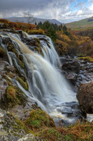 Fintry Loup (2)