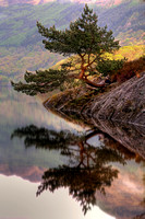 Rowardennan Bonsai