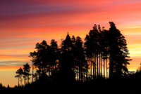 The Lonesome Pines (2)